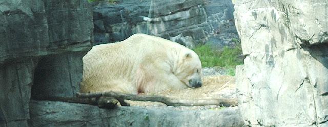 Meska NY zoo sode