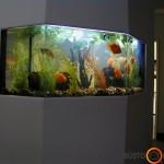Sienoje įmontuotas didelis gėlavandenis akvariumas