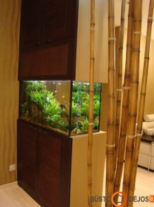 Gėlavandenis akvariumas sukuria ramybės oazę