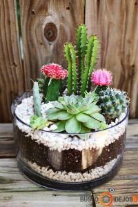Pasidaryk pats kompoziciją iš kaktusų