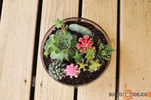 Sodiname kaktusus