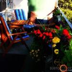 Ryškiaspalvės gėlės