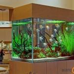 Didelis, žalias ir labai mielas akvariumas