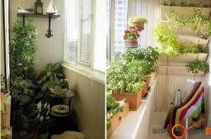 Balkone galima auginti ir prieskonines žoleles, salotas ir net pomidorus
